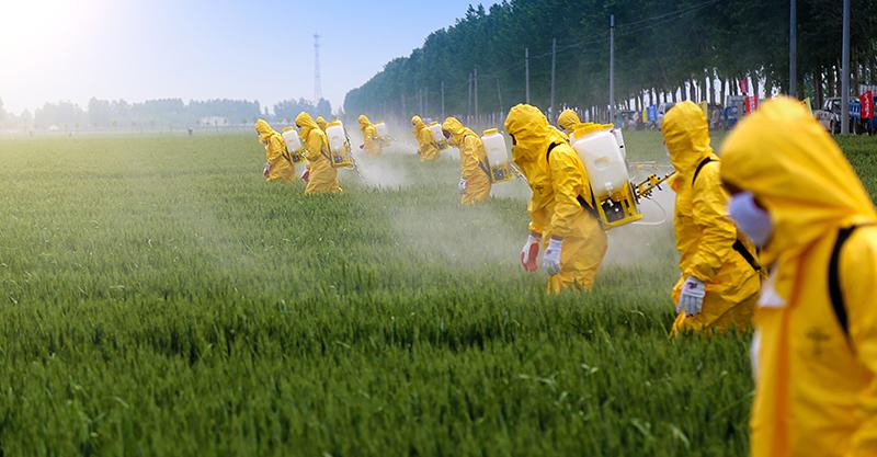 chlorpyrifos pesticides