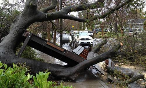 tree evacuation administration